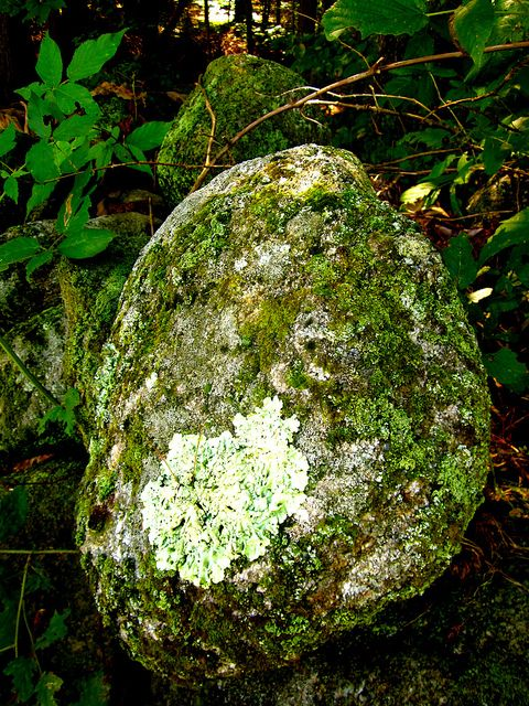 """Original """"Pinner"""" says, """"One of my favorite rocks in my yard. <3""""    I love knowing that there is someone else out there like me, who would have something like a """"favorite rock"""".  And it is indeed a lovely rock!"""