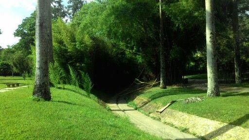 Cueva de Bambú