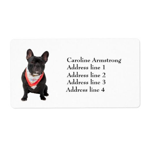 French Bulldog photo custom address labels.  Click on image to add your name and address to see how it looks