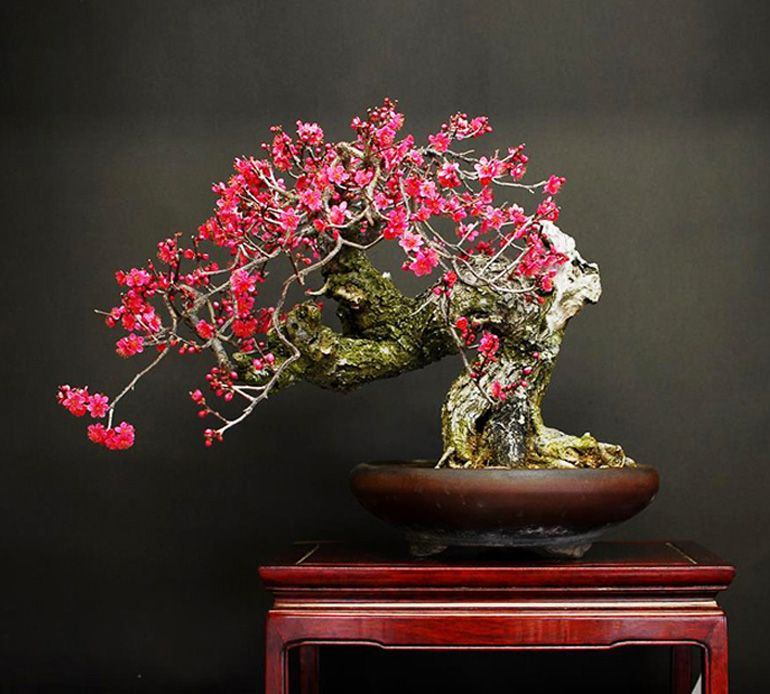 Promoting And Expanding The Bonsai Universe