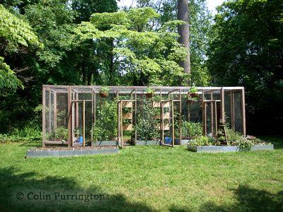 Colin Purrington Photography: gardening &emdash; Squirrel-proof cage for backyard gardening