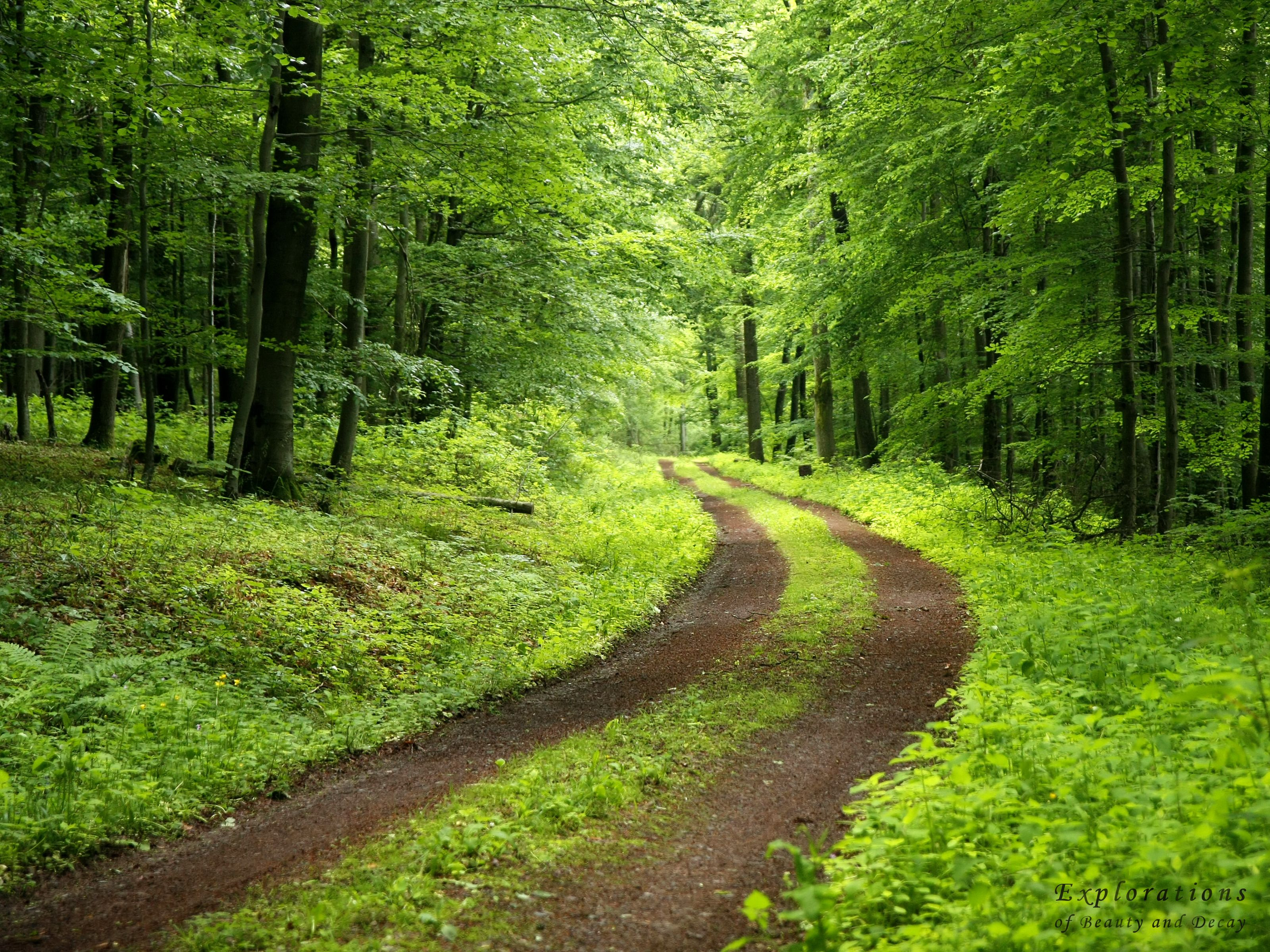 Forest Trail Nature Wallpaper Hd Nature Wallpapers Green Nature Wallpaper