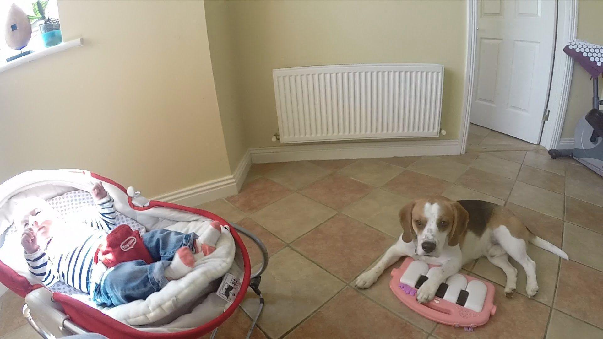 Download Smart Beagle Adorable Dog - ca672caf6f0dae20bb3c1915491dd0bb  2018_422758  .jpg