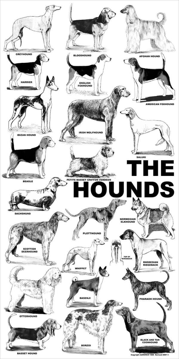 Aaronco Poster The Hounds Dog Poster Herding Dogs Popular