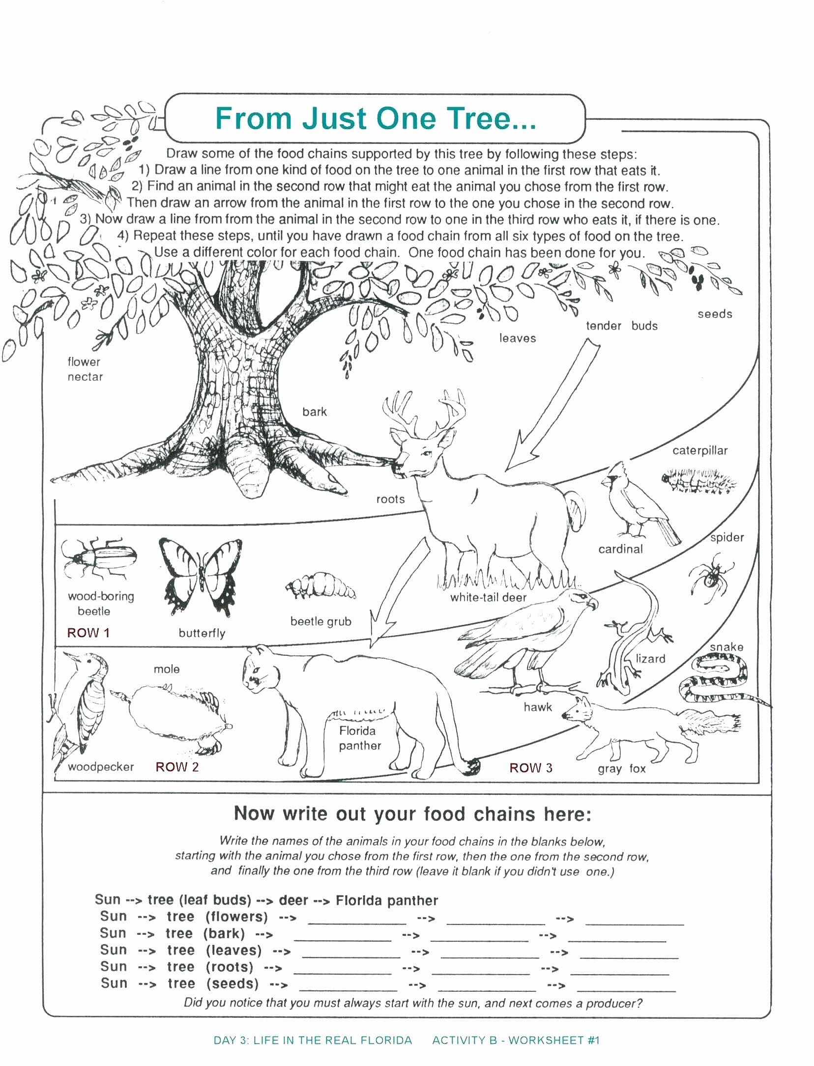 Rainforest Animal Coloring Page Unique Rainforest Animals Coloring Pages Preschool Science Worksheets Biology Worksheet Food Chain