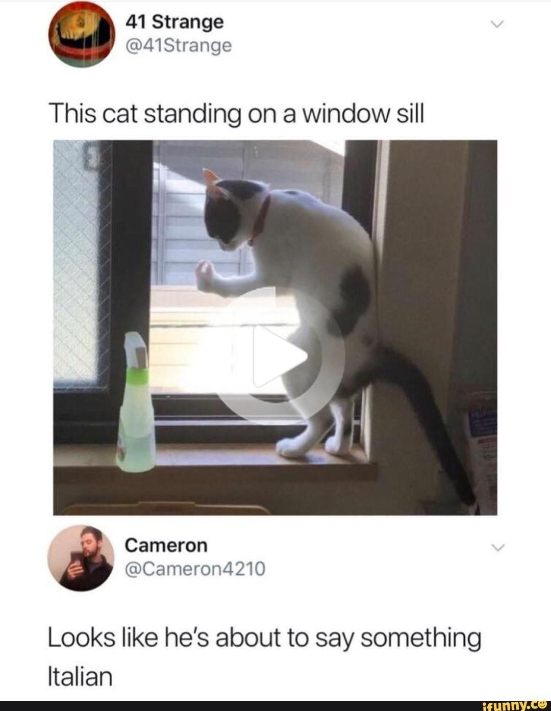 This Cat Standing On A Window Sill Looks Like He S About To Say Something Italian Ifunny Cat Stands Funny Pictures Cats