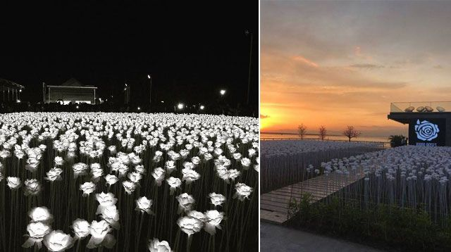 A Cafe Featuring 10,000 Glowing Roses Just Opened In Cebu
