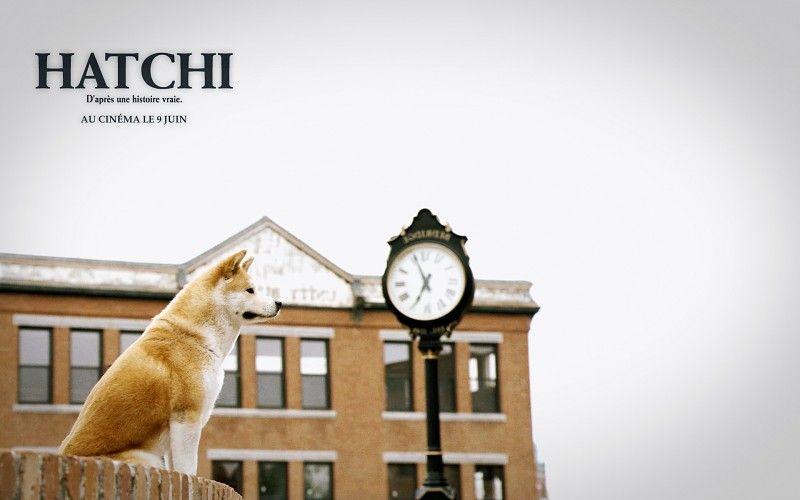 http://www.desktopimages.org/pictures/2013/0720/1/hachiko-dog-wallpaper-225698.jpg