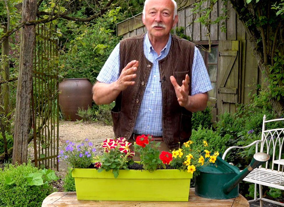 Comment Creer Une Jardiniere De Plantes A Fleurs Annuelles