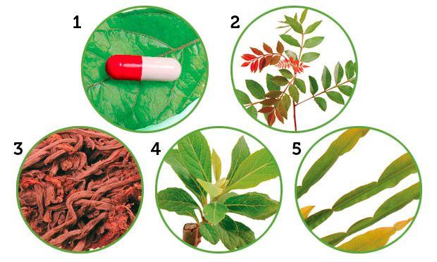 Conheça 10 plantas que curam