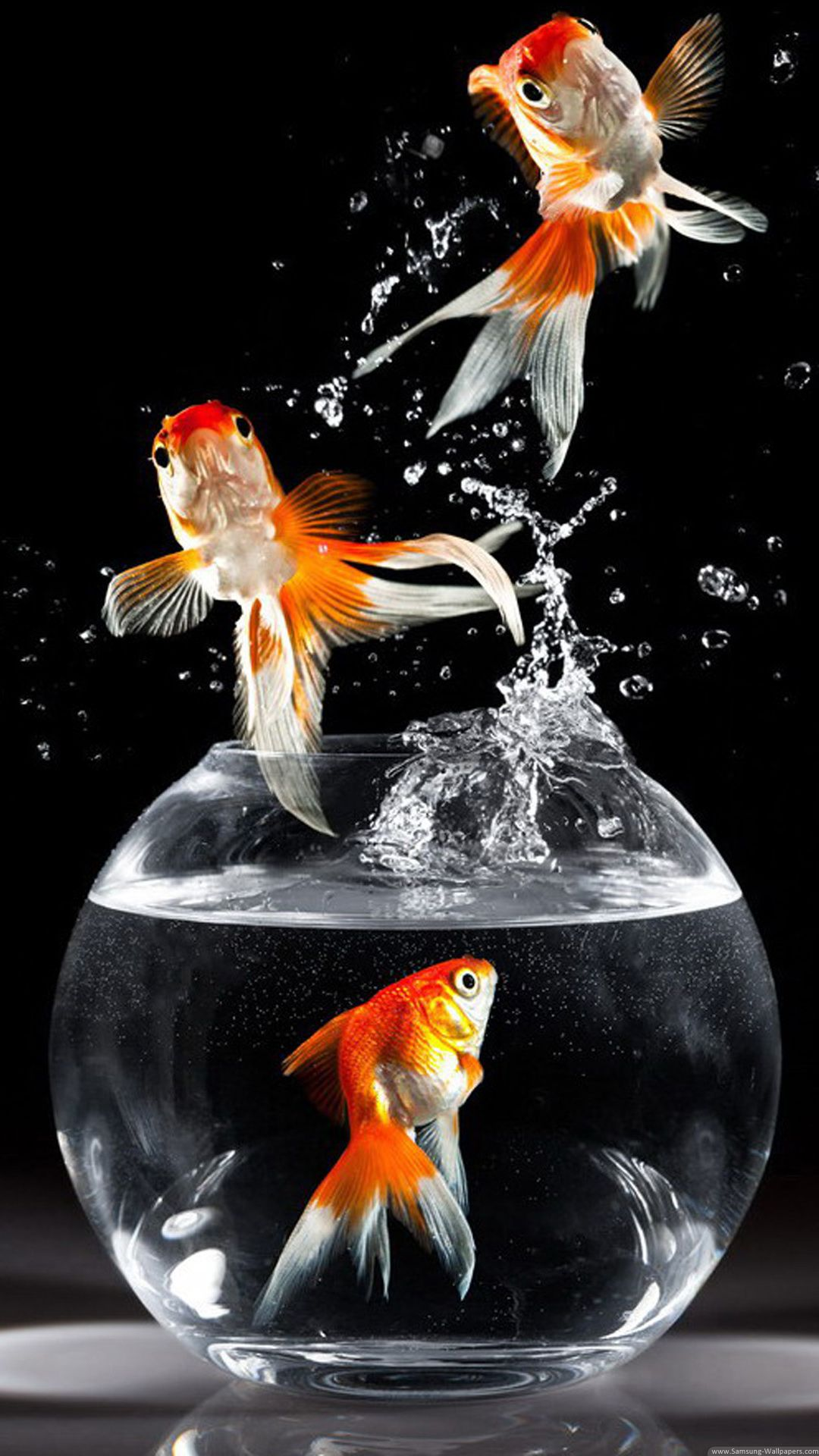 Pin By Red Rose On Animals Goldfish Wallpaper Fish Wallpaper Golden Fish