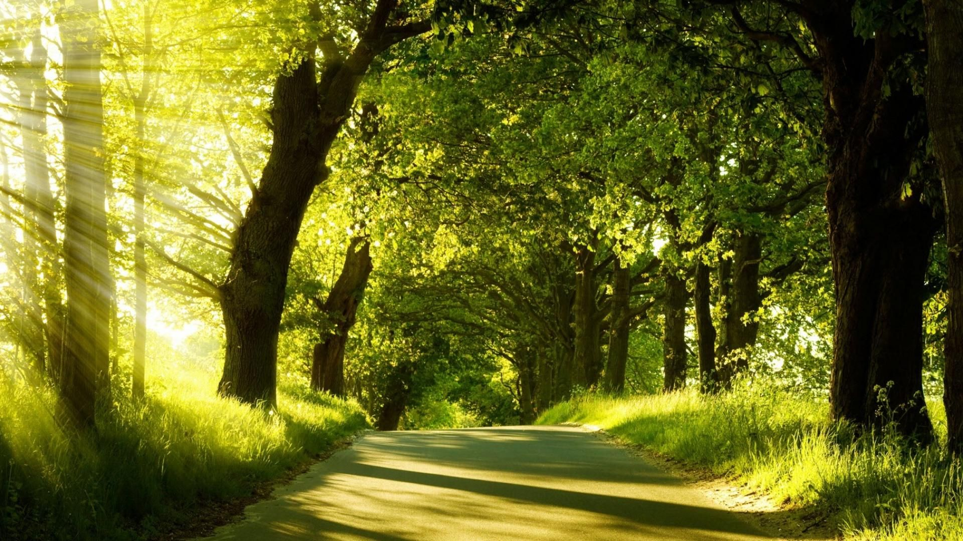 Nature Life Images 6 Hd Wallpapers Lzamgs Com Landscape Photography Trees Green Nature Forest Wallpaper