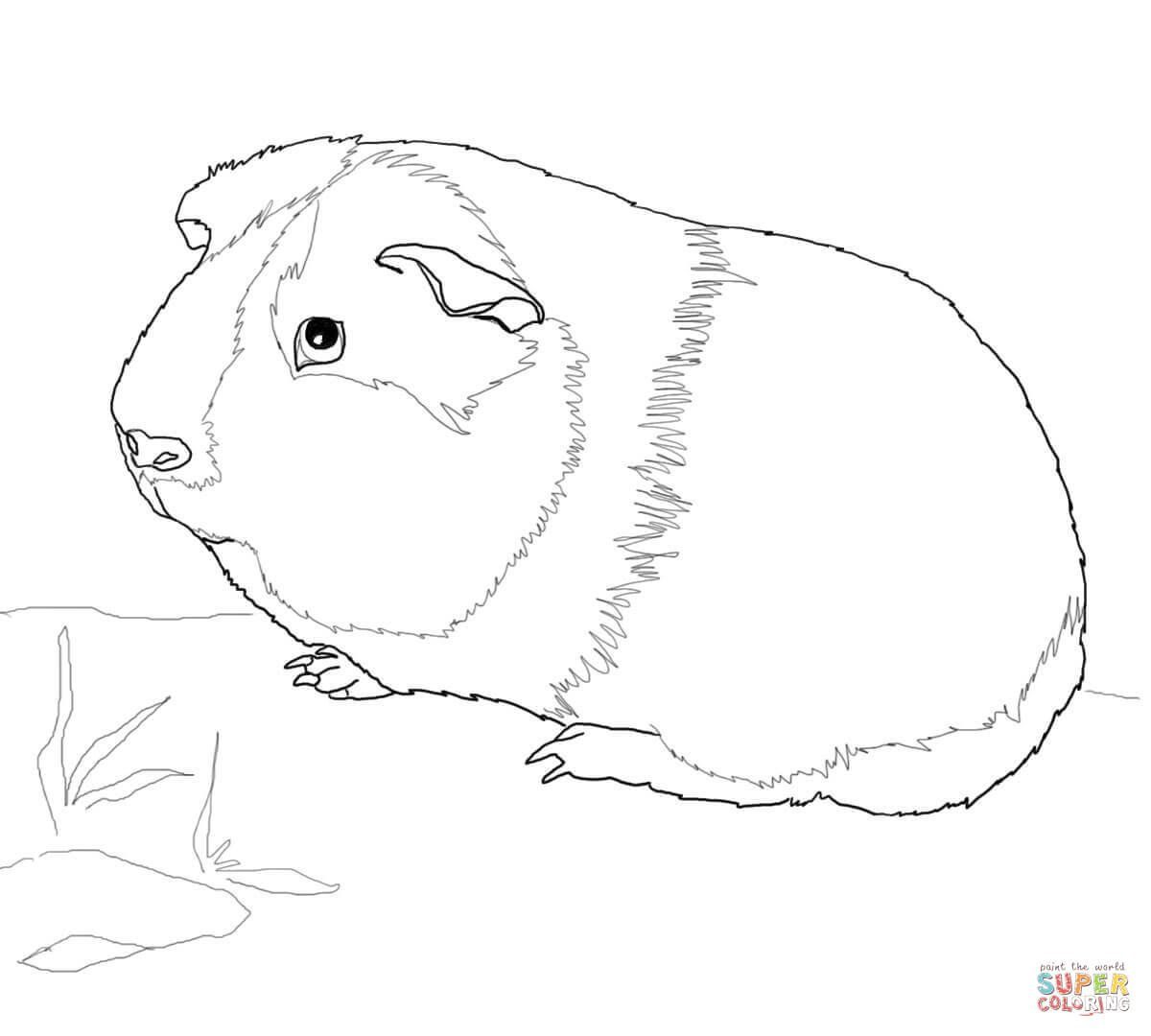 Guinea Pig Coloring Pages