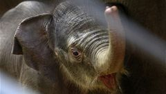baby elephant from Prague