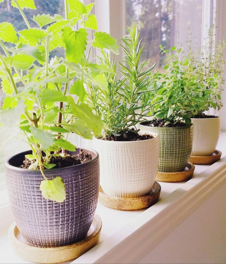 Windowsill Herb Garden The Artful Roost In 2020 Herb Garden In Kitchen Garden Plant Pots Herb Garden Pots
