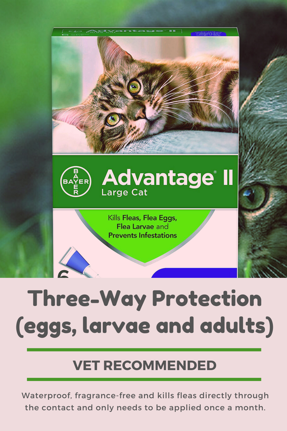 Best Flea Medicine For Cats In 2020 Flea Medicine For Cats Cat Medicine Cat Fleas