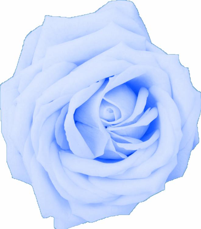 Wildflower Blue Rose Png Watercolor Watercolor Rose Blue Flower Png Blue Rose