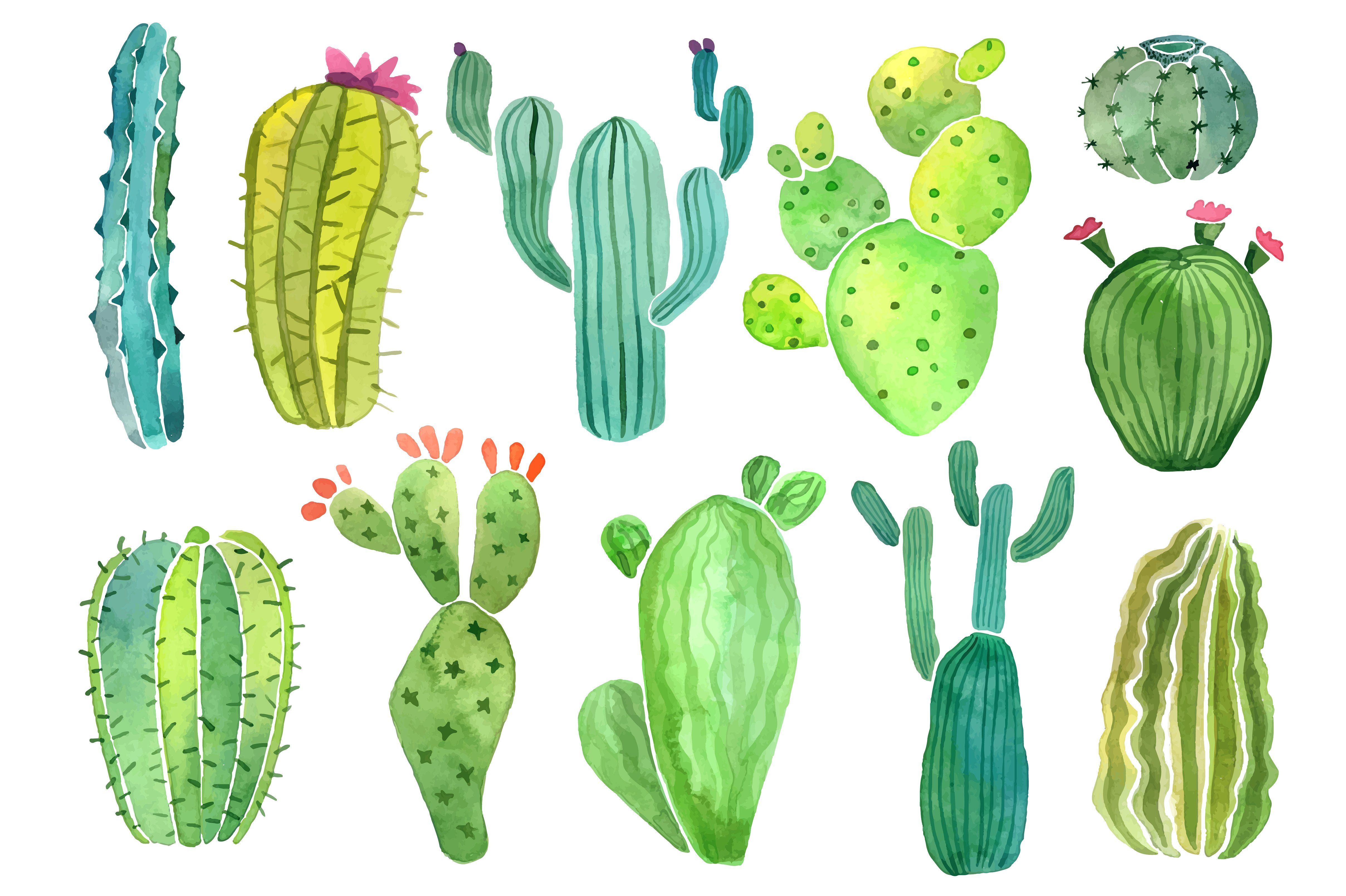 Watercolor Cactus And Succulent Set Objects 3 Cactus Backgrounds