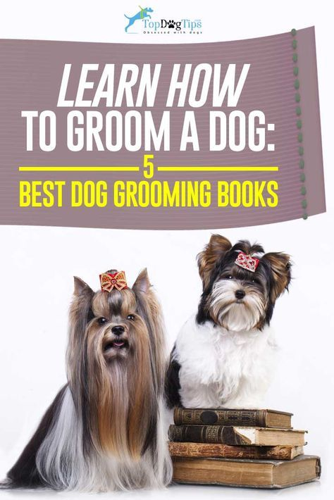 20 Best Dog Grooming Books For Beginners Intermediates And Total