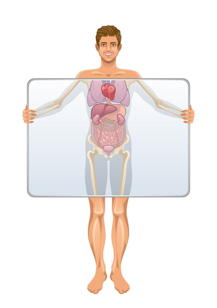 Human Body Facts All About Anatomy Pinterest Human Body Facts