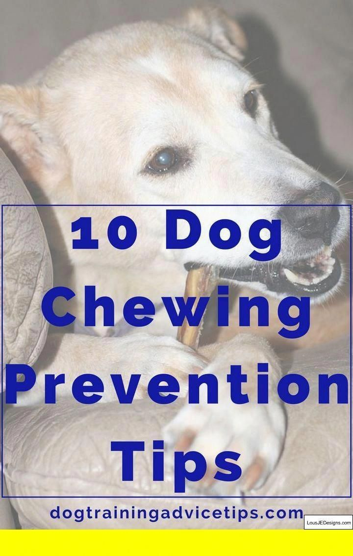 Pics Of Dog Obedience Tips Diy Schedule And Other Ideas Also