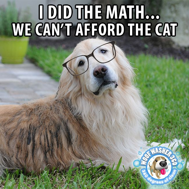 I Did The Math We Can T Afford The Cat Dog Meme Cute Funny Animals Dog Memes Funny Animals