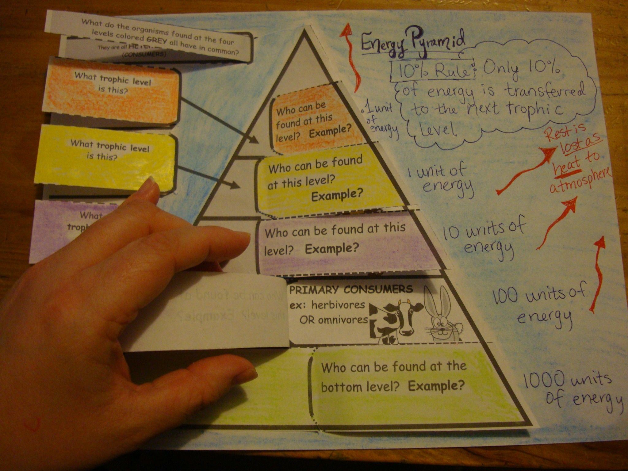 Energy Pyramid Foldable
