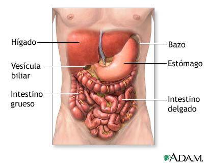 Anatomía normal | Anatomy | Pinterest | Anatomía, La salud y Ciencia