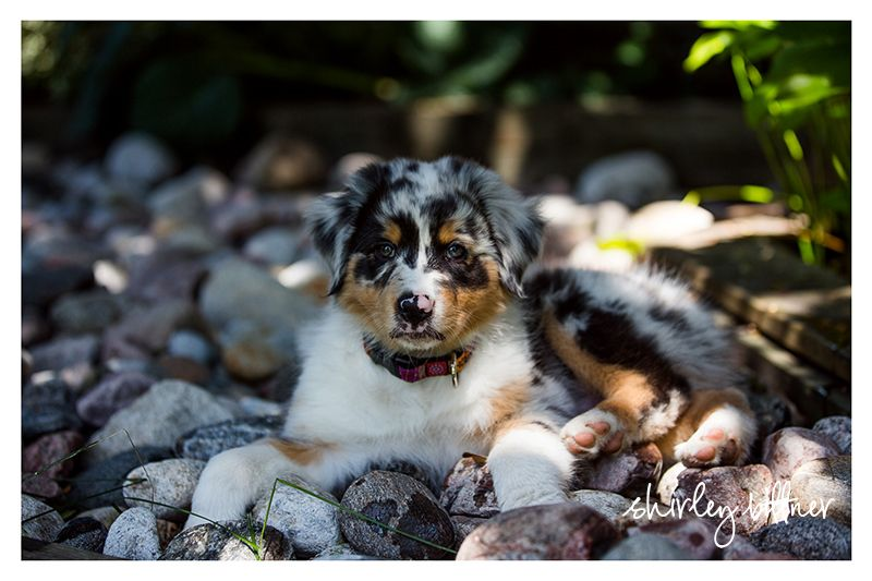 Ottawa Pet And Family Photographer Specializing In Natural Light