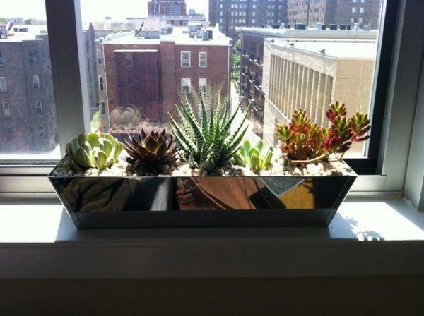 Amazing Decoration Tips Plan Windowsill Cacti Decorating Ideas