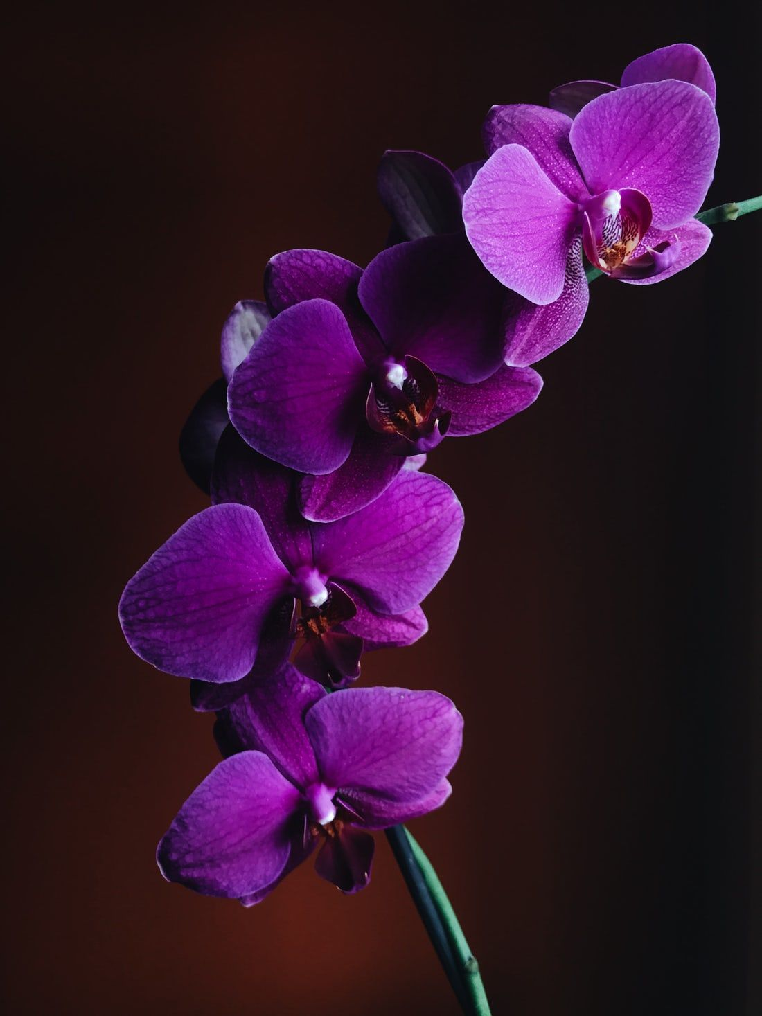 Flower Of The Day May 7 2019 Nature Post In 2020 Orchid Wallpaper Purple Orchids Orchid Flower