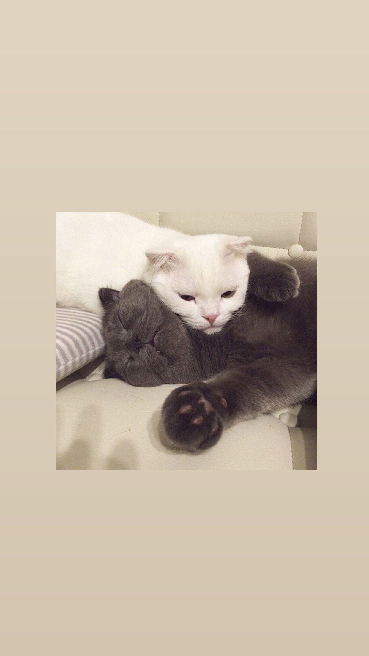 Instastaerry.night🍓 Cat aesthetic, Cat phone wallpaper