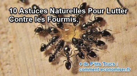 10 astuces naturelles pour lutter contre les fourmis. Black Bedroom Furniture Sets. Home Design Ideas