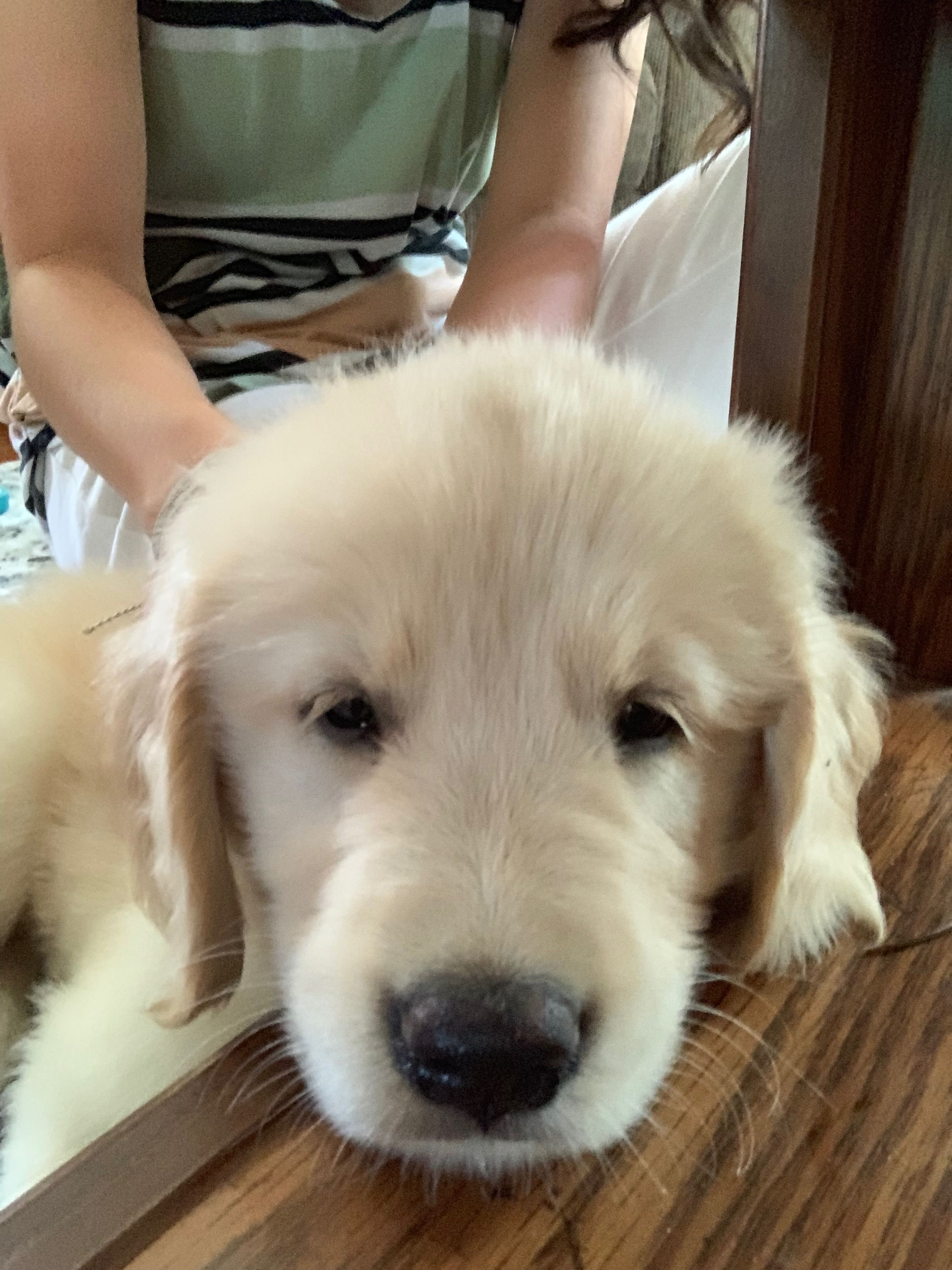 Shoo Shleepyyy Cute Cats And Dogs Cutest Dog Ever Golden Retriever