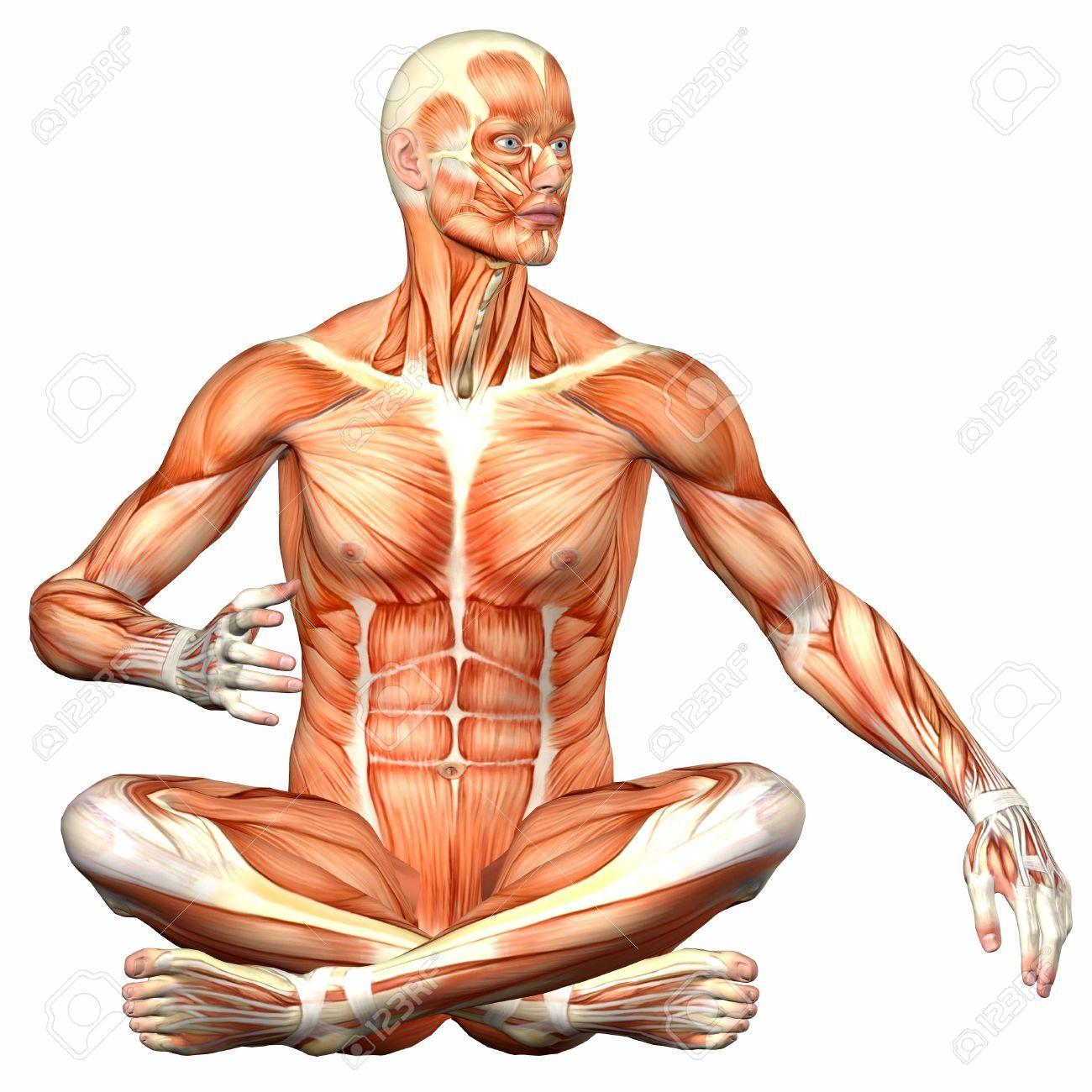Magnífico Diagramas De Anatomía En Blanco Friso - Anatomía de Las ...