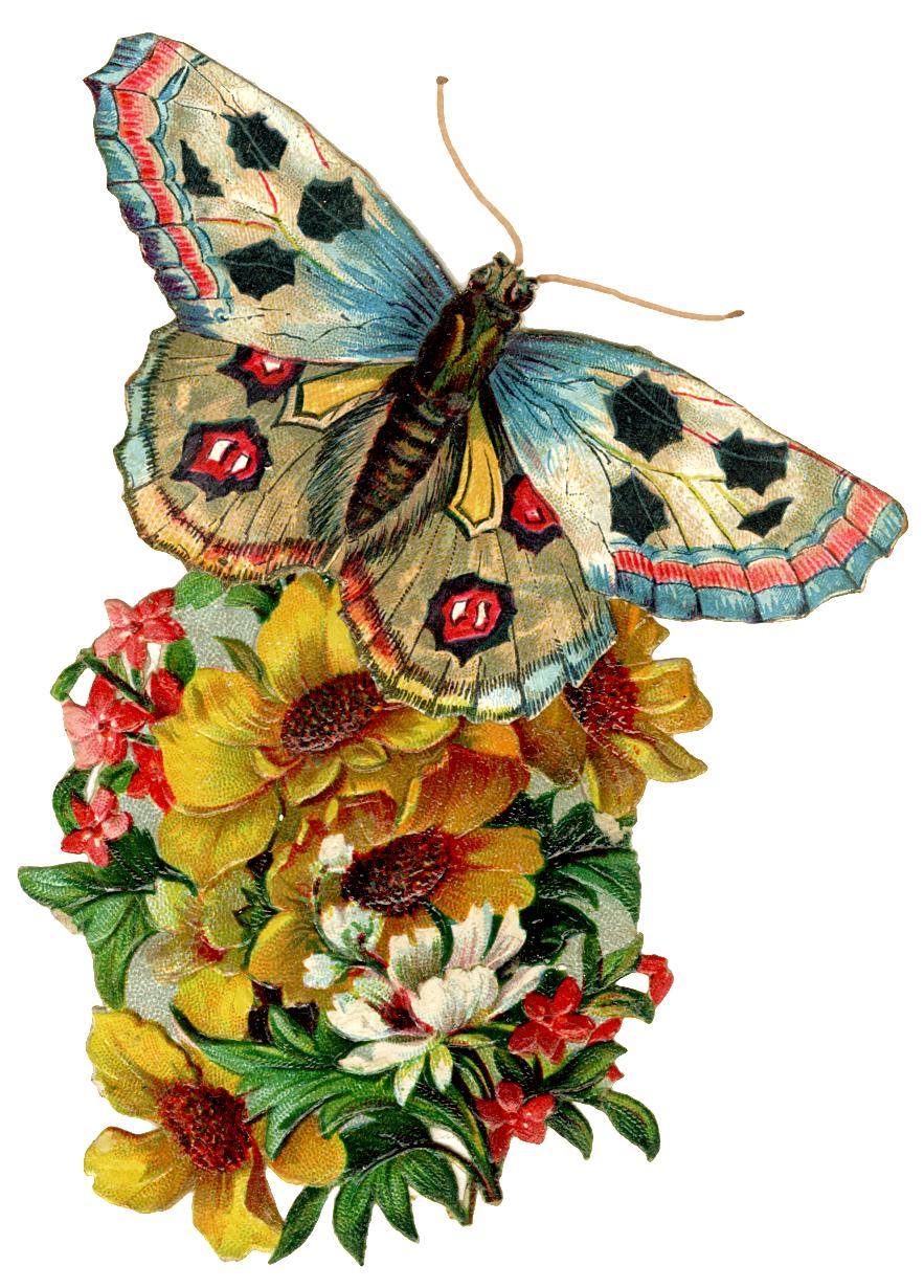 Анимированные бабочки для открыток, поздравлению