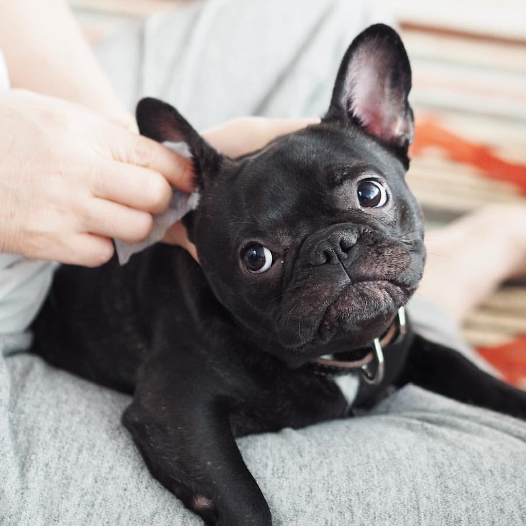Irritating Face Dog Ears
