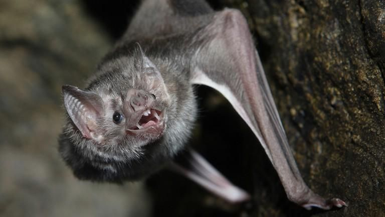 5 Reasons Why Bats Are The Best Vampire Bat Animals Mammals