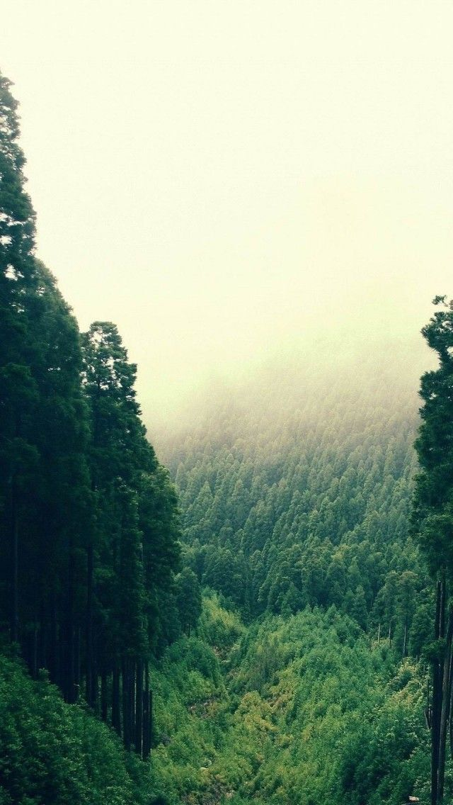 High Mountain Forest Landscape Hd Iphone Wallpapers Forest Landscape Landscape Nature