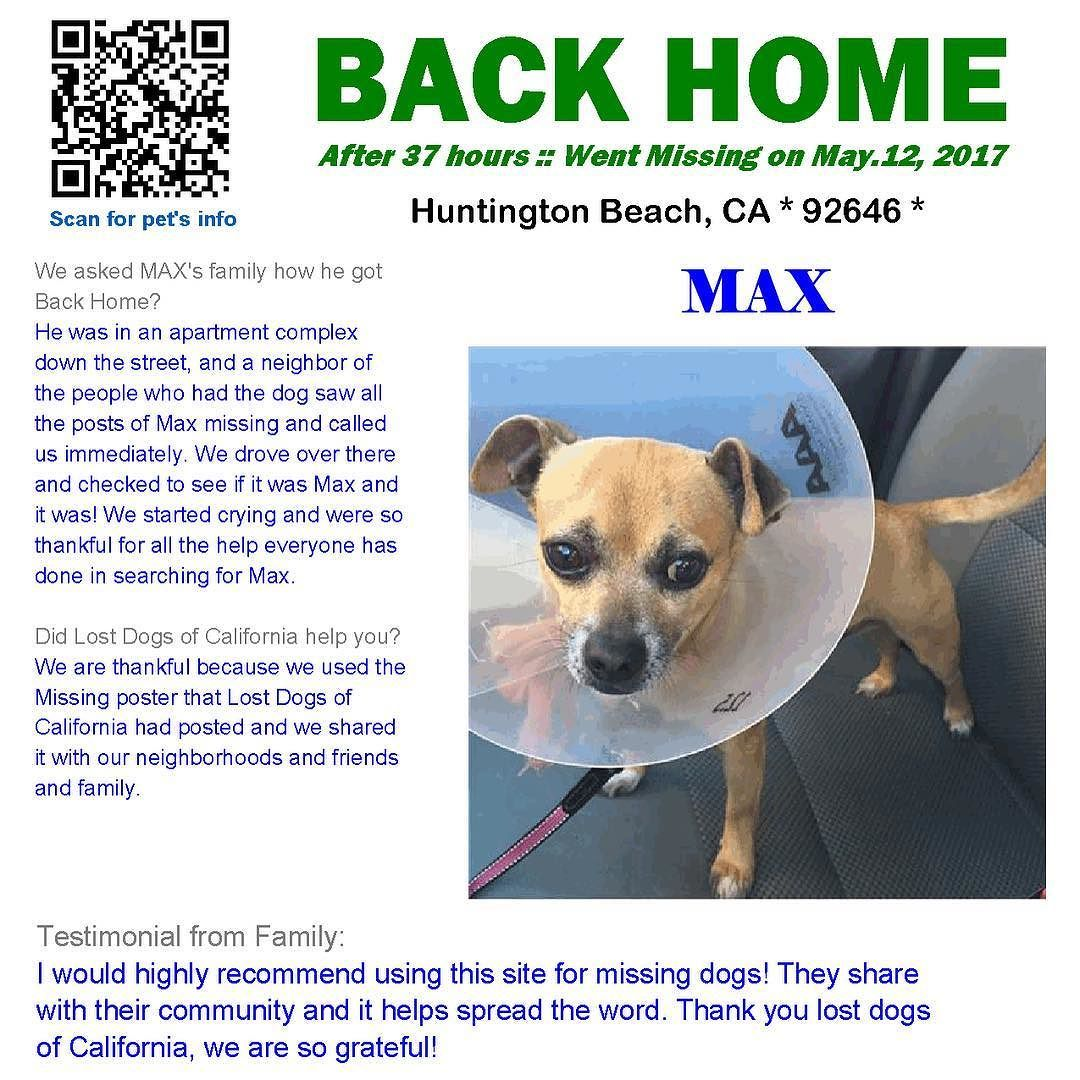 We Are Very Happy To Report Max Is Back Home After 1 Day He Was In An Apartment Complex Down The Street And A Neighbor Of The Losing A Dog