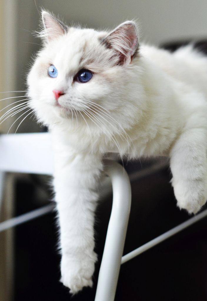 ความสามารถพ เศษของแมว ตอนท 2 เล บ กระโดดและการกล บต วจากท ส งของแมว Http Www Petworldtoday Com E0 B9 80 E0 B8 A5 E0 B9 87 E0 B Cute Animals Cats Cute Cats