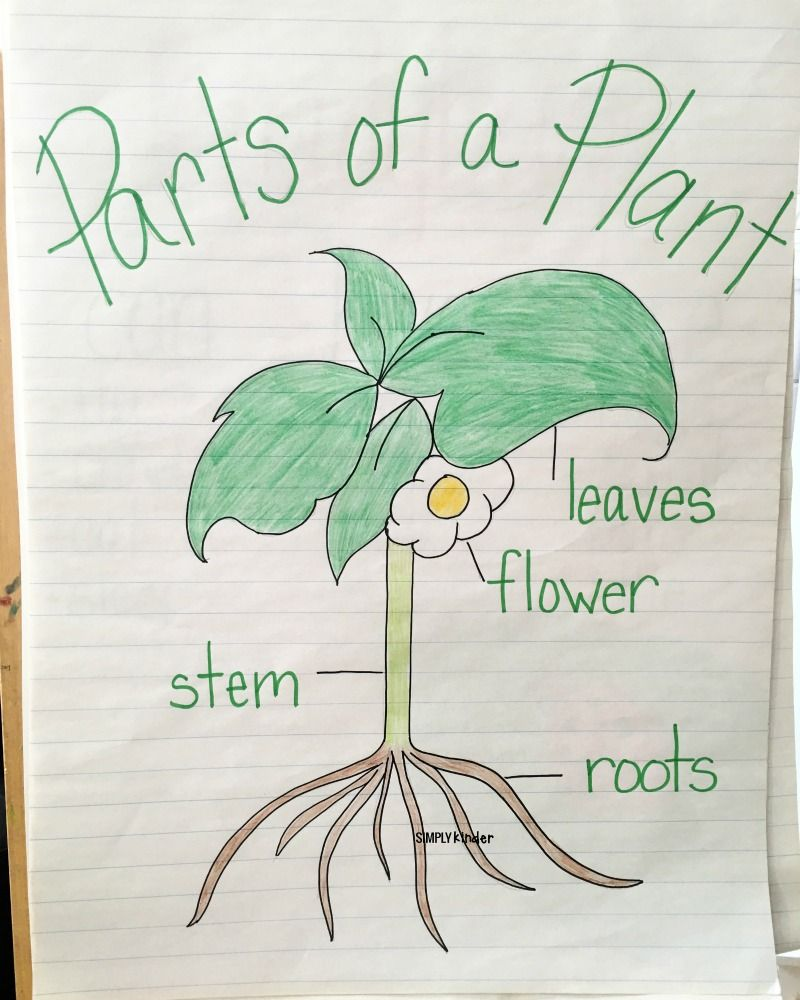 It is a picture of Astounding Parts of a Plant Printable