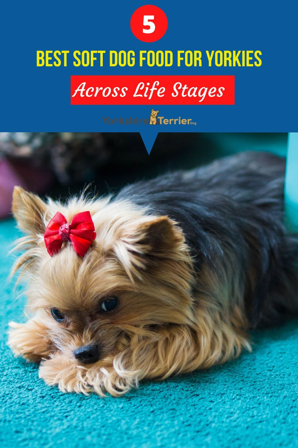 5 Best Soft Dog Food For Yorkies Across Life Stages In 2020 Yorkie Dog Food Recipes Best Dog Food