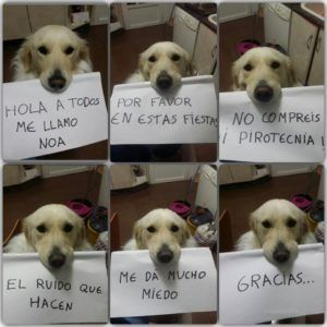 Mascotas Pirotecnia Cohetes Petardos Miedo Perros Tristes Perros Perros Frases