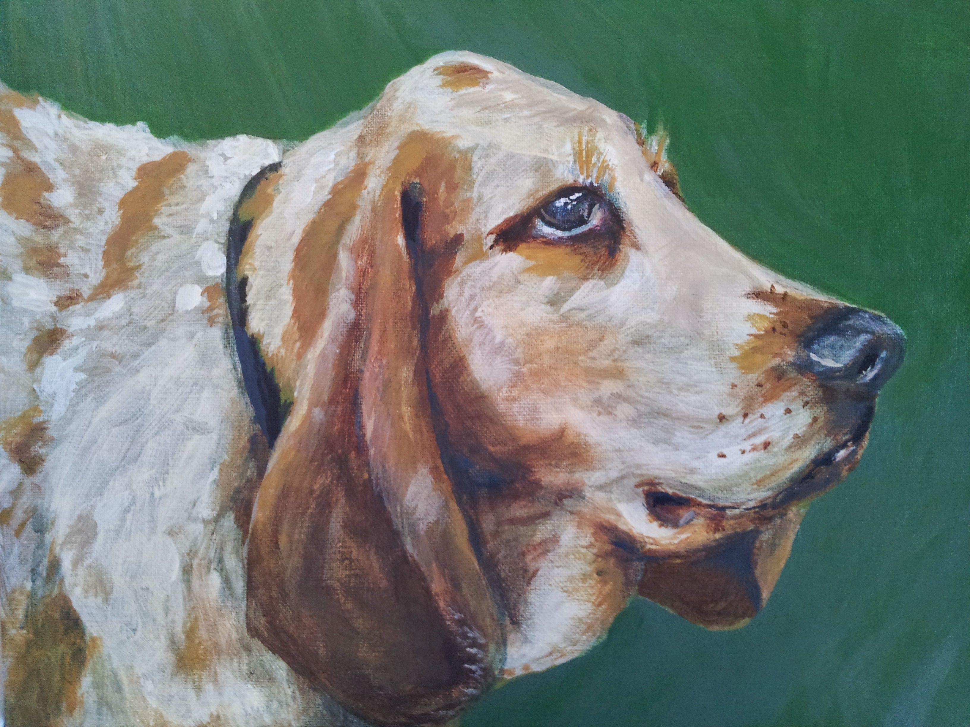 Bassett Hound Bassett hound, Hound, Bassett