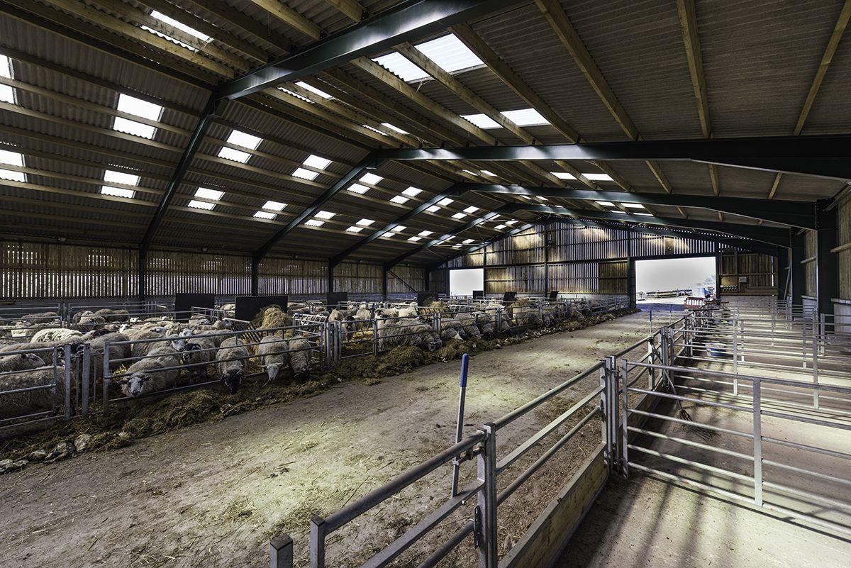 Sheep Housing & Sheep Sheds | Stables design, Livestock ...