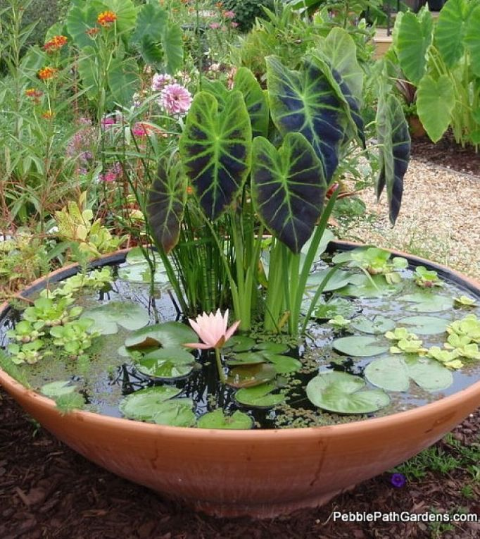 Container water garden ideas outdoor areas places to visit container water garden ideas outdoor areas workwithnaturefo