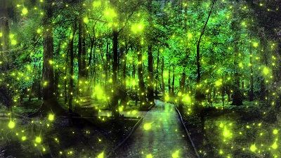 synchronized fireflies, congaree swamp.fireflies,lightening bugs ...