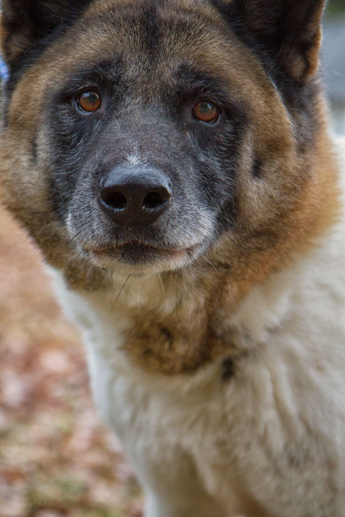 Diesel Scared Skittish Senior Currently Boarded At Leading Edge