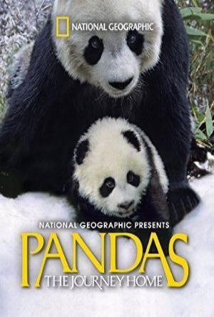 Pandas: The Journey Home (2014) filmini 720p kalitede full hd türkçe ve ingilizce altyazılı izle. http://tafdi.com/titles/show/83-pandas-the-journey-home.html